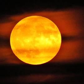 Hunter's Moon  by Lori Frisch