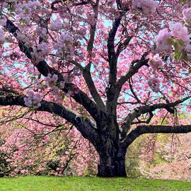 Sublime Sakura by Jessica Jenney
