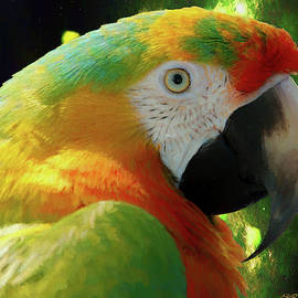 Hybrid Mcaw Parrot Profile - Painting by Ericamaxine Price