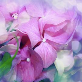 Hydrangea Delight by Terry Davis