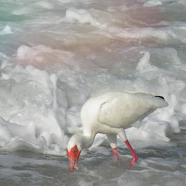 Ibis and a Tinted Sea by Rosalie Scanlon