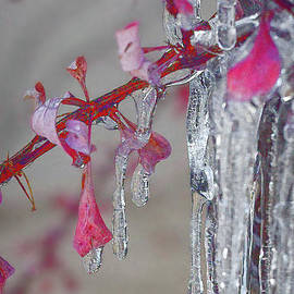 Ice Cold by Susan Warren