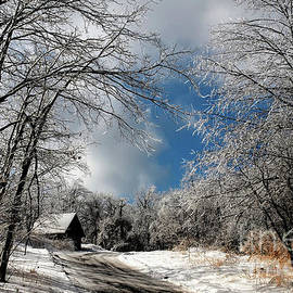 Ice Storm Aftermath by Lois Bryan