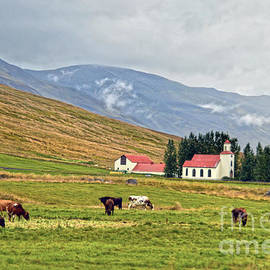 Icelandic Church and Dairy Cattle by Catherine Sherman