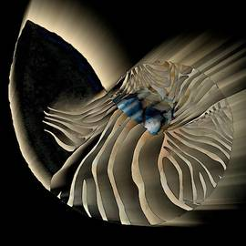 Illuminated Seashell White by Joan Stratton
