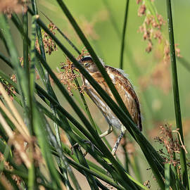Immersed In Reeds by Lorraine Harrington