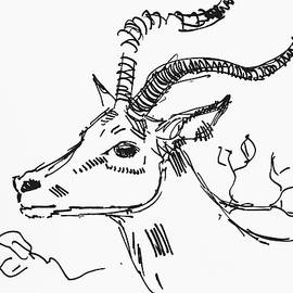 Impala With Antlers Head Drawing Gestural Antelope by Mike Jory