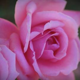 Impossibly Pink by Patricia Strand