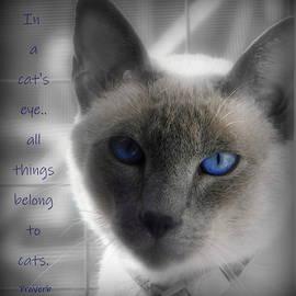 In a cat's eye by Karen Cook