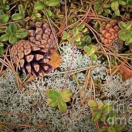 In a pine forest by Veikko Suikkanen