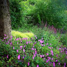 In The Land Of Pink Flowers by Alida M Haslett