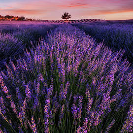 In To The Dream by Jorge Maia