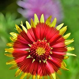 Indian Blanket by Dennis Nelson