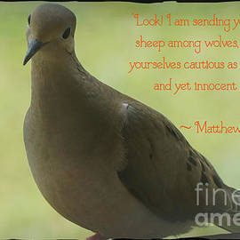 Innocent As Doves by Maxine Billings