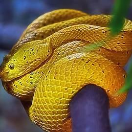 Integrated Serpent - Eyelash Viper by Chrystyne Novack