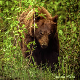 Intense Grizzly by Claudia Abbott
