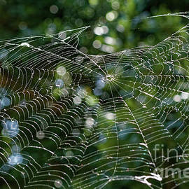 Into The Spider's Web  by Jo Ann Gregg