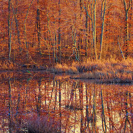 Ipswich River Wildlife Sanctuary by Jeff Folger