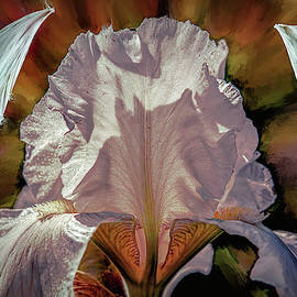 Iris And Angel #i8 by Leif Sohlman