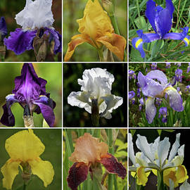 Iris Collection 2019 by Richard Cummings