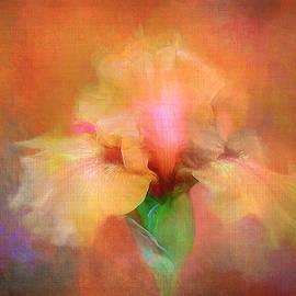 Iris Expression by Terry Davis