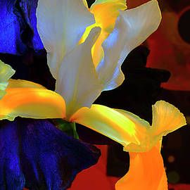 Iris Flowers. by Alexander Vinogradov