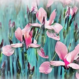 Irises of My Garden by Slawek Aniol