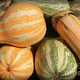 It is Harvest Time - Colorful Gourds by Dora Sofia Caputo Photographic Design and Fine Art