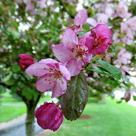 It is Spring Raining by Lyuba Filatova