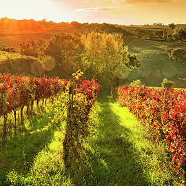 Italy, Umbria, Vineyard In Autumn by Slow Images