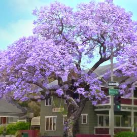 Jacaranda Tree, Wider View by Brian Tada