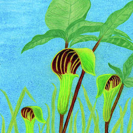 Jack-in-the-Pulpit by Mary Walchuk