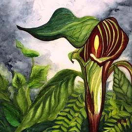 Jack in the Pulpit - Pitcher Plant  by Janine Riley