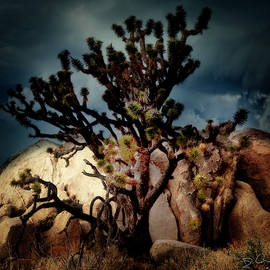 Joshua Tree At Midnight by Evie Carrier