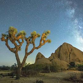 Joshua Tree NP by Davorin Mance