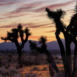 Joshua Trees At Sunset by James Eddy