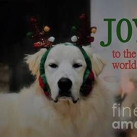 Joy To The World Pyrenees by Patti Whitten