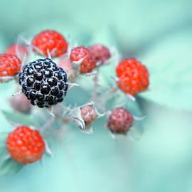 Christina Rollo - Juicy Berries
