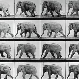 Jumbo Jogger by Eadweard Muybridge
