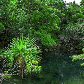 Jungle Of Xel-ha by Sun Travels