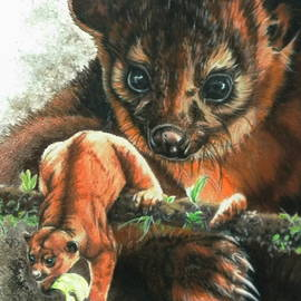 Kinkajou by Barbara Keith