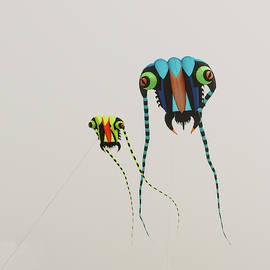 Kites at Ocean Shores by Jeff Burgess