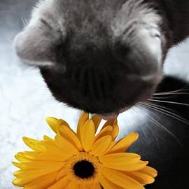 Kitten and the Daisy  by Mesa Teresita