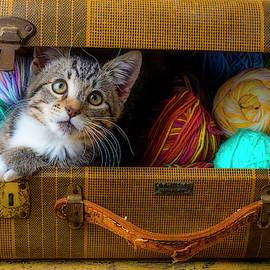 Kitten In Suitcase Full Of Yarn by Garry Gay