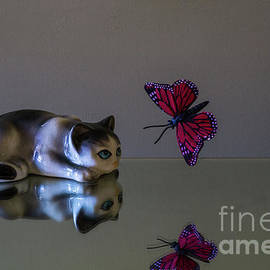 Kitten Meets Butterfly by Linda Howes