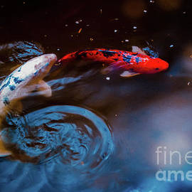 Koi Swirl by Colleen Kammerer