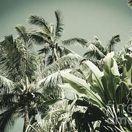 Kuau Hawaii Tropical Palms Sea Green Paia Maui by Sharon Mau
