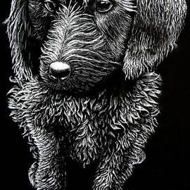 Labradoodle Puppy by Senecca Corsetti