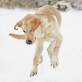 Labs Just Wanta Have Fun by Jennie Marie Schell