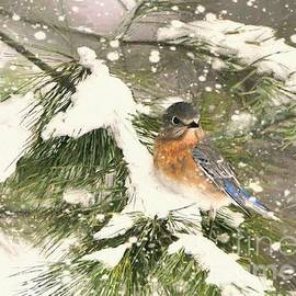 Lady Bluebird In The Snow by Tina LeCour